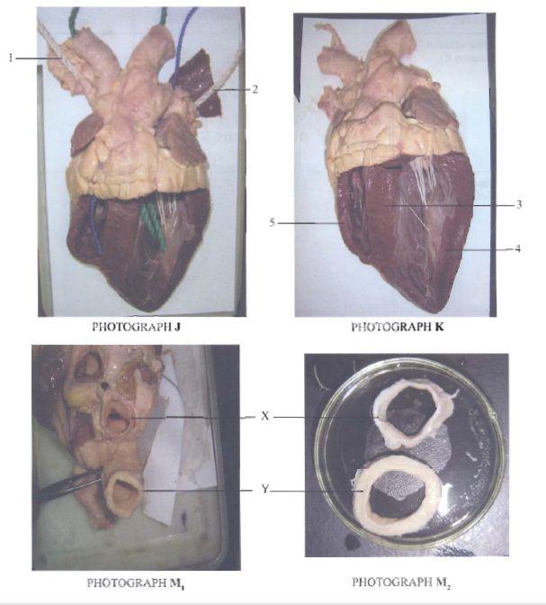 KCSE 2010 - Biology Paper 3